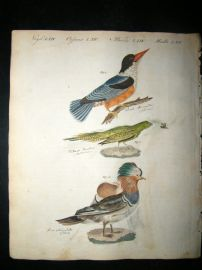 Bertuch 1804 Bird Print. Chinese Kingfisher & Duck, Australia Ground Parrot.